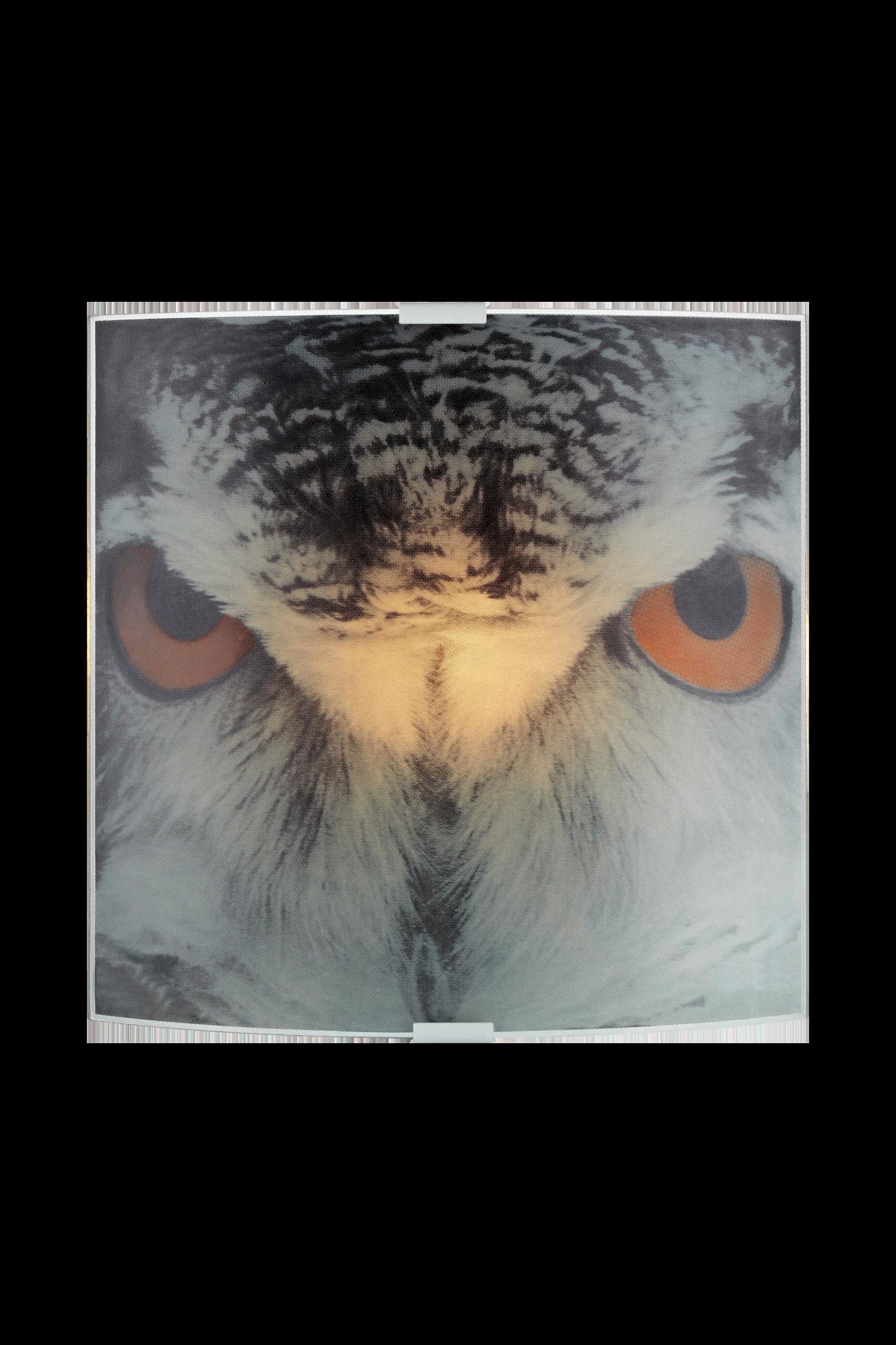 OWL - Wall